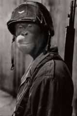 funny-animals-monkey-soldier.jpg