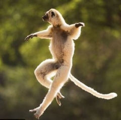 Animals_MonkeyDancing280.jpg