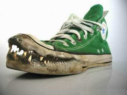 corocodile-or-alligator-converse-funny-shoes1.jpg