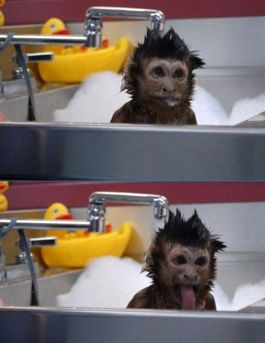 monkey-bath-time.jpg
