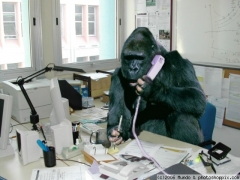 gorilla_at_work.jpg