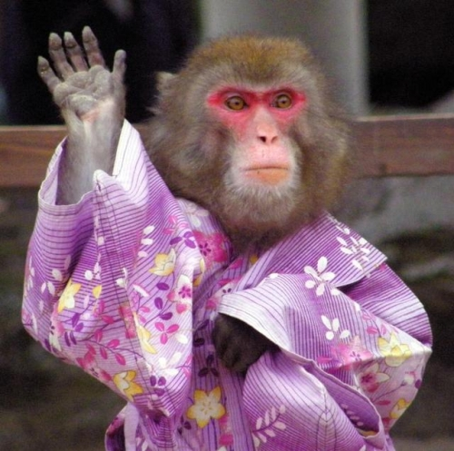 A Japanese monkey waves bye-bye after show.jpg