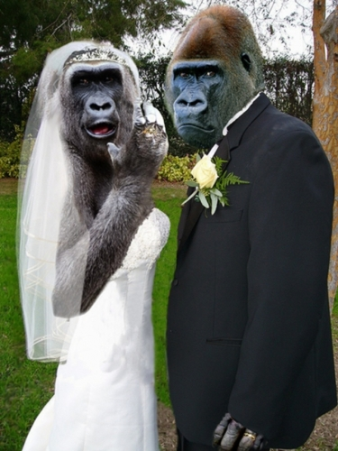 MonkeyWedding23149.jpg
