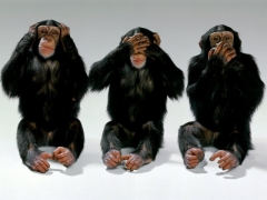 The-three-monkeys.jpg